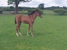 filly foal by Bazaars Exclusive