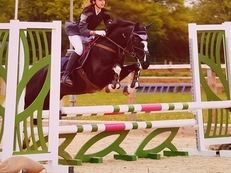 Stunning 14HH Pony Club Pony/Dressage/BYRDS/SJ Competition Mare for young rider or petite adult!**