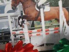 16. 3 BAY MARE FOR SALE