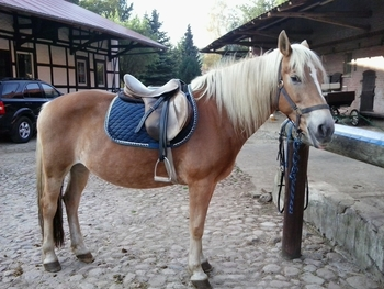 WANTED: Horse Share or Loan in Stirling
