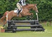 16.1hh 6yr Old superb all-rounder / competition mare