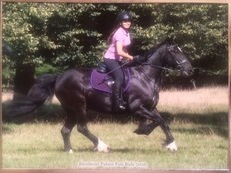 14hh Welsh x available for full loan in Whitchurch (bucks)