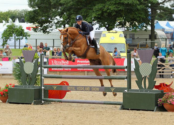 TALENTED SHOW JUMPER FOR SALE
