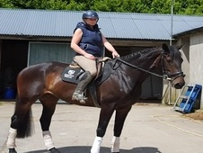 ***SOLD TO NORFOLK*** - Potential Top Event Mare