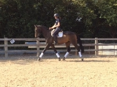 EXITING YOUNG DRESSAGE/EVENT PROSPECT