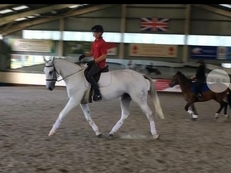 Quality Riding Club Allrounder
