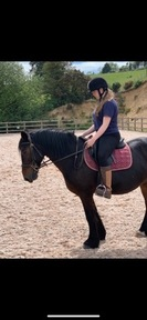 PART LOAN FOR A GORGEOUS 14.3-15hh MARE