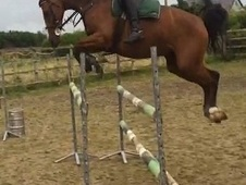 Lux Z 5yr Old Young Showjumper/Eventer