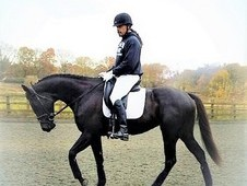 Beautiful and Talented Black Thoroughbred Mare