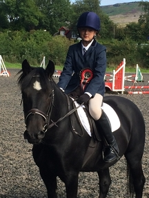 *******SOLD *****Beautiful 11 year old black New Forest gelding