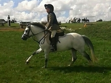 Fantastic PC/hunting allrounder LR/first/second pony