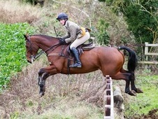 Great hunter/ showjumping prospect