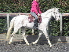 Super dressage or riding pony