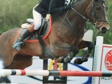 Top 138cm Jumping Pony - 399points