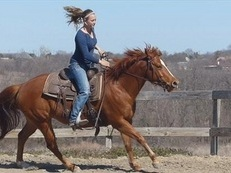 Fantastic Quarter Horse For Sale to A ood and caring home