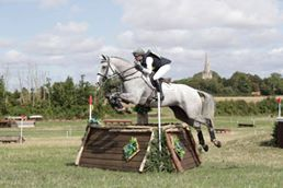 17hh 9yr Old Eventer, Hunter-Jumper, Showjumper, Top of the Range All-Rounder