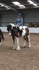 15.2 aprox 6 yr old skeebald cob x mare for sale