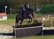 TOP POTENTIAL EVENTER OR SHOWJUMPER