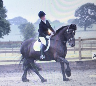Dressage for sale in Lancashire | Horsemart