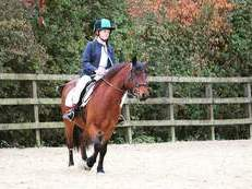 New Forest Pony 13.2 hh Gelding. SOLD * NOW SOLD *