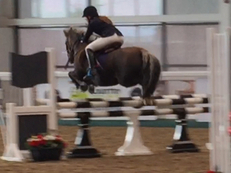'Cefn Sweetlife' jumping pony
