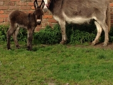 Donkey Mare & foal-watch video clip!