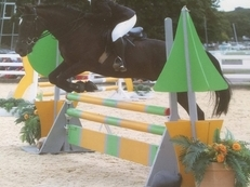 For Sale - 14.2hh Gelding, TB x