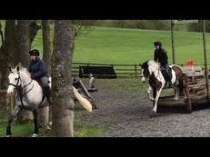 13.1hh Native Type Mare for Sale
