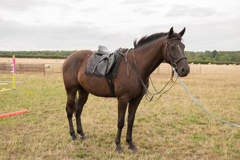 3 YEAR OLD EVENT HORSE FOR SALE