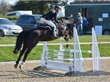 16. 2 OBOS Quality 7 year old jumper with sensible temperament