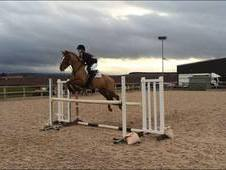 Top class jumping pony for sale