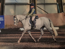 12hh Welsh B x A Mare
