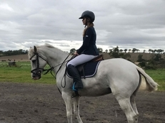 15hh Superstar Mare for sale