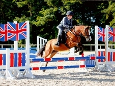 Outstanding 12hh Competition Pony
