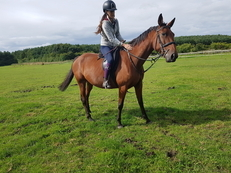 beautiful 16.1 14year old tb/pacing mare for sale.