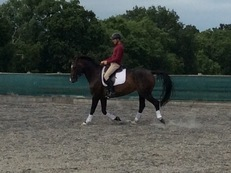 Talented  ,16hh  9yrs beautiful, dressage mare