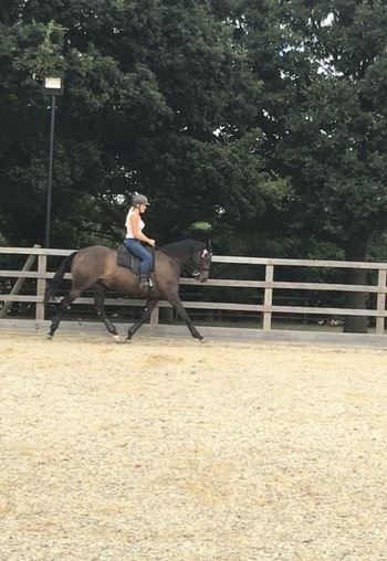 Lovely 15.2 potential dressage horse