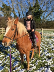 Gorgeous Pony for Sale