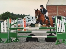 Super Talented 14.1hh Connemara X Thoroughbred Mare