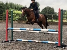 **NEW PRICE** Talented 13hh Jumping/PC allrounder pony