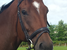 16. 2hh with huge potential