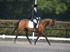 Hansome TB Gelding, Hacking, Dressage Riding Clubs etc
