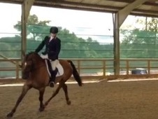 SOLD... 15. 2 WB X Irish, Allrounder, 9 year old Gelding