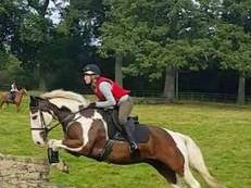 16.1 9 year old tri coloured gelding