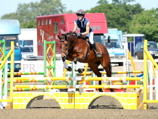 Smart 14.3HH Irish Bay Mare