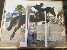 Fabulous All-Round Competition Pony