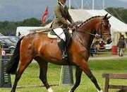 Clifton's Melody, 7 yrs 16hh Bay Mare