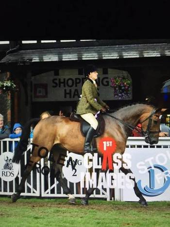 Range Rover Hunt Horse for sale!! Top Level Show Hunter that is the Ferrari of All-Rounders!