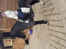 Fantastic all rounder/ lend rein / pony club pony