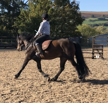 *Videos Available* Registered WPB Gelding